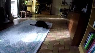 Blacky the Cat Burglar - Introducing my crazy insane Cat - GoPro Cat Filming