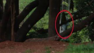Ghost Sighitings 2015 | Real Videos | Real Stories | Ghost Caught On Camera | Ghost Under Tree