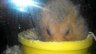 What does Steve's hamster think?