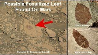 Fossilized Leaf Found On Mars
