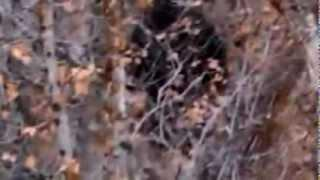Bigfoot in Provo Canyon! (2012 Video)