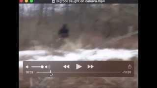 Bigfoot caught on Camera Breakdown