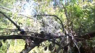 Bigfoot of Evansville Indiana Urban Wildlife Sasquatch WoodKraft