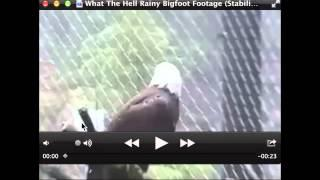 What the Hell? Rainy Bigfoot Footage Breakdown