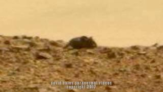 Real OR Fake? Mouse Alive On Mars Sighting | ¿Real o falso? Ratón vivo en la observación de Marte