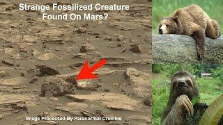 Strange Fossilized Creature Or Statue Found On Mars?
