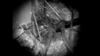 dddavids Ghost Cams Basement hole explored. Paranormal Vlog.