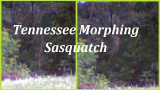 Tennessee Morphing Sasquatch:  Stick To Squatch in 2 Seconds Flat  W E Squatchers Analysis