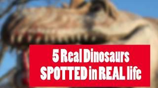 Dinosaurs Spotted in REAL LIFE Captado en Video y Visto en la Vida Real (Part 1)