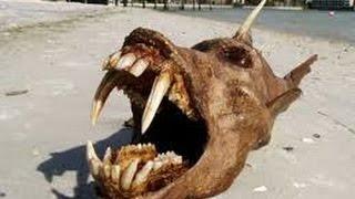 Sea Monster and Strange Creature found around the world