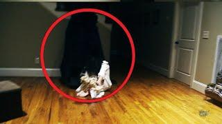 Mysterious Creature Compilation !! Shocking Ghostly Figure Caught on Camera