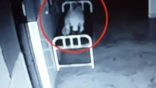 Crazy Ghost footage caught