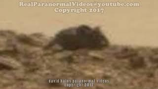 ALIVE Mouse Living On MARS SPOTTED IN REAL LIFE & caught on camera