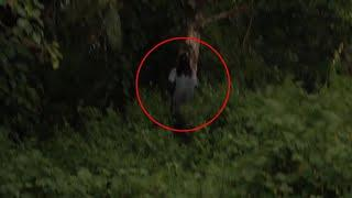 Scary Video - Real Ghost In Forest (Try Not To Be Scared)