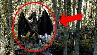 10 Dragones Reales Captado en Video y Visto en la Vida Real