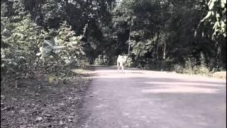 REAL Ghosts Videos 2016 LATEST ~ Ghost Caught on CAMERA Following DOG @ Haunted Forest