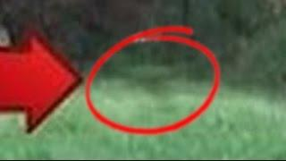 TOP 4 Real Dinosaurs Caught On Camera Alive Dinosaurs REAL or FAKE? YOUTUBE COLOR ENHANCED