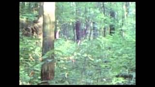 Bigfoot Sighted in Pittsburgh Forrest?