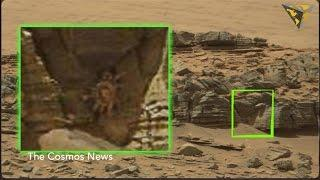 Did NASA discover a crab-like alien on Mars?