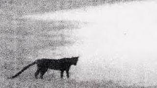 Beast of Bodmin  from the List of Cryptids that might be Exist