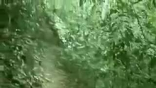 Terrific Ghost Sighting From Amazon Forest   Ghost OR Alien   Real Ghost Videos   GHOST HUNTIN   You