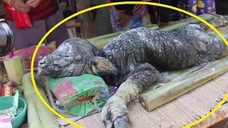 Mysterious creature which appears to be a hybrid between a crocodile and a buffalo terrifies village