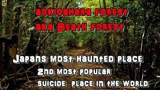 Japan's Most Haunted Place : Aokigahara Suicide Forest