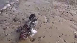 Un hombre encuentra el cadáver de una sirena en una playa del Reino Unido