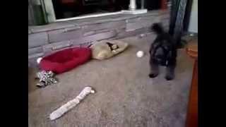 Nicole's Vlogs; Chloe thinks Grumpy Cat is real?