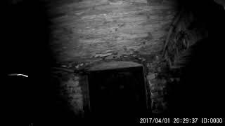 Ghostly Dark Shadow And Mist Appears In Haunted Castle Prison Cell