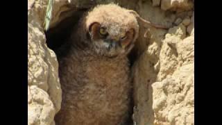 My Owl Friend Had Babies!!!