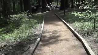 "Calaveras Big Trees Part 2 - ""The Biggest Stump You'll Ever See"""