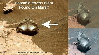 Possible Exotic Plant Found On Mars?