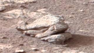 Terrifying Creature fossil on Mars