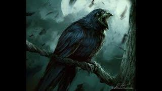 do i have another crow in my home  !!!!!!!!!!