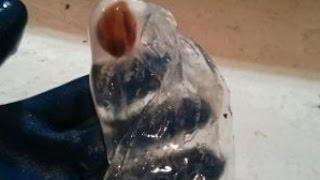Strange sea creatures found off the coasts of Nova Scotia and Newfoundland