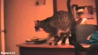 Cat jump FAIL 3D avalaible