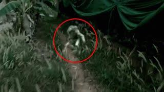 Spookiest Ghost Caught On Tape From An Agriculture Land!! Real Ghost Paranormal Mystery!!