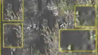 5 - Year-Old Encounters Bigfoot, Communicates, Takes Photo & Makes Video To Explain