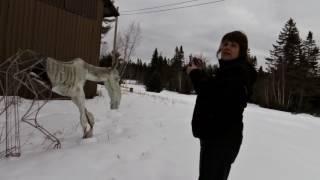 Animal Land, NB