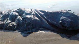 GIGANTIC, MYSTERY SEA CREATURE LANDS ON A MEXICAN BEACH