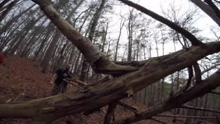 Tracking Bigfoot Part Three . Alabama Cryptozoology Footage Captured Tree Structures