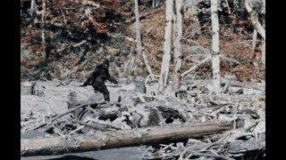 Possible Bigfoot Sounds