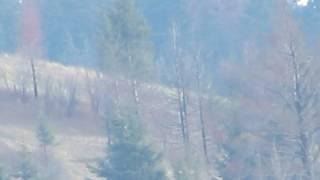 Searching For Bigfoot Klicker Mountain (Audio Removed/No Wind)