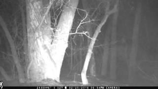 Bigfoot Sighting caught on Browning Spec Ops HD Trail Camera Breakdown