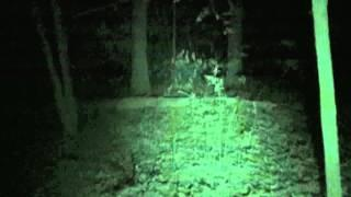Maybury State Park - Ghost Walk - 2015 - Infirmary trail