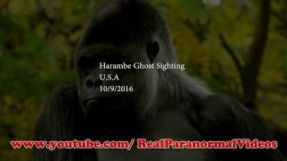 HARAMBE Gorilla Ghost Caught On Camera and spotted in real life 2018