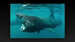 Most Terrifying Animals From Around The World | Scariest creatures ever