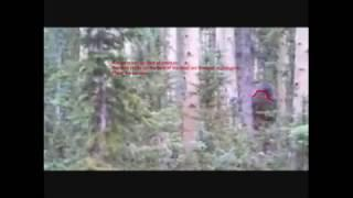 Very clear images of bigfoot!  Video analysis of evidence