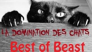 Best of Beast #8 - La domination des chats